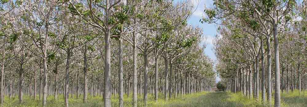 Bäume – Wir brauchen sie, sie brauchen uns