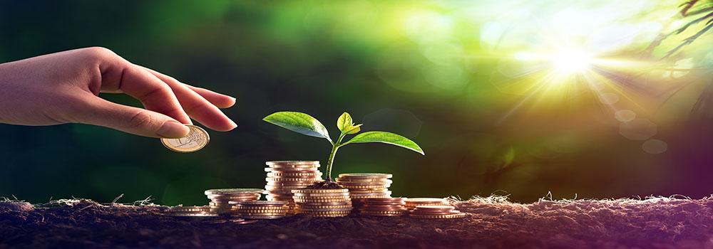 https://treevest.de/gruenes-investment-fuer-naturverbundene-anleger/