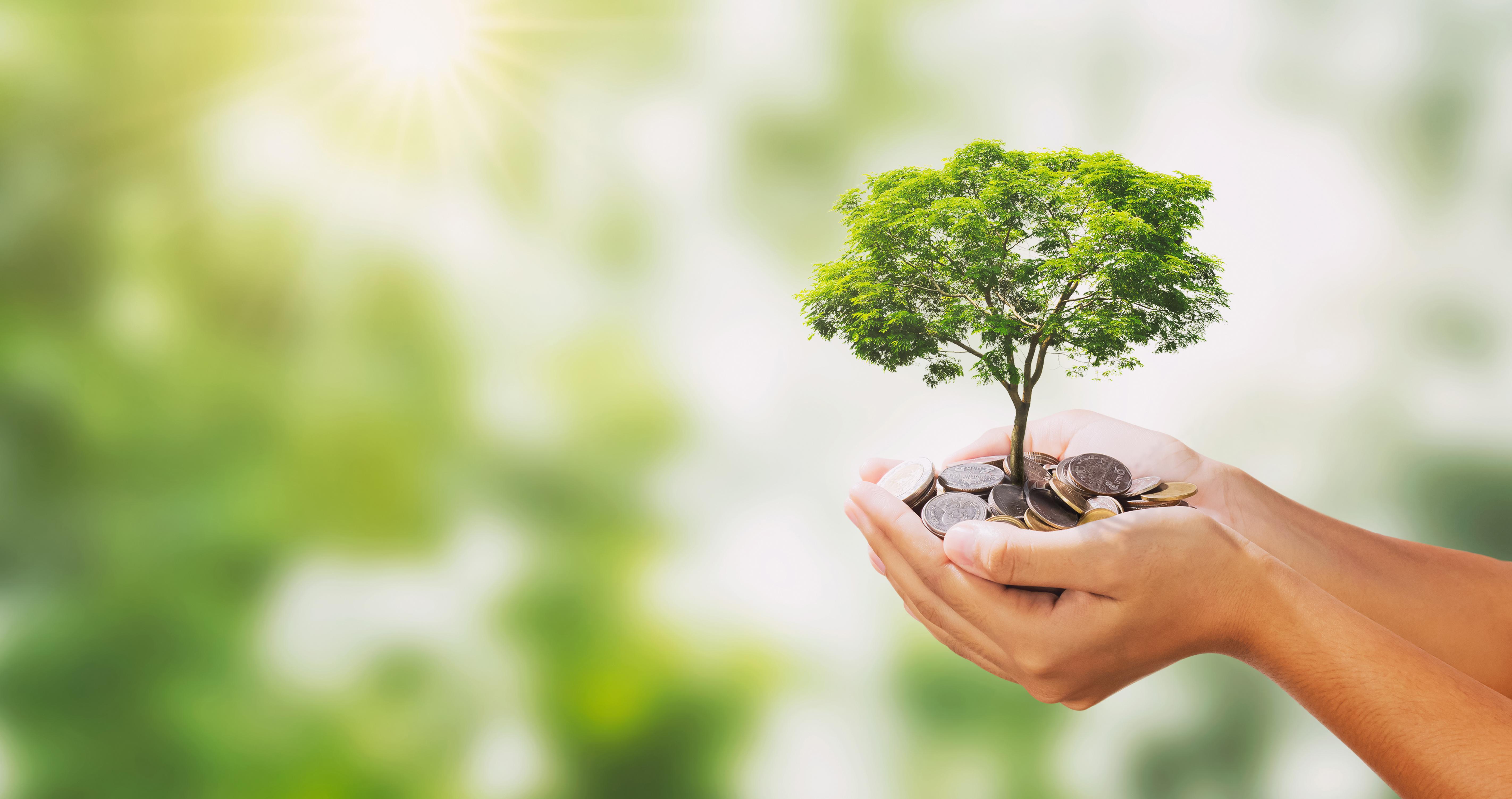 Baumstarkes Investment – Holz als Anlagemodell